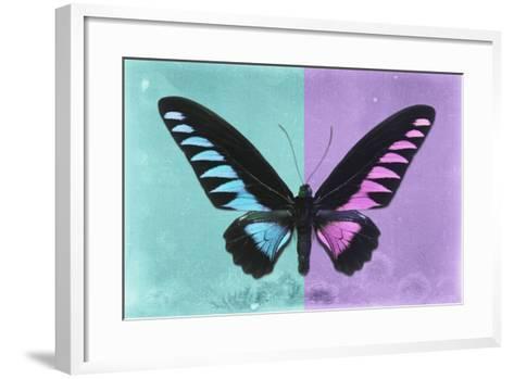 Miss Butterfly Brookiana Profil - Turquoise & Mauve-Philippe Hugonnard-Framed Art Print