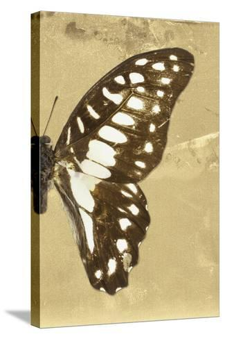 Miss Butterfly Graphium Profil - Honey-Philippe Hugonnard-Stretched Canvas Print