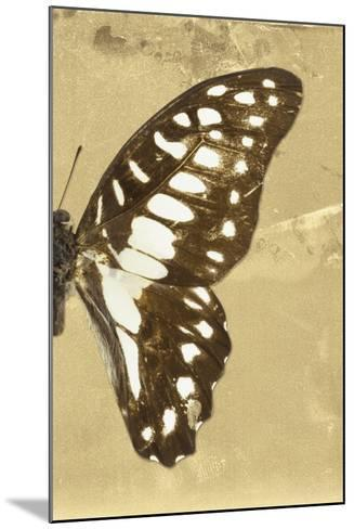 Miss Butterfly Graphium Profil - Honey-Philippe Hugonnard-Mounted Photographic Print
