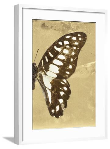 Miss Butterfly Graphium Profil - Honey-Philippe Hugonnard-Framed Art Print