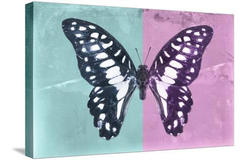 Miss Butterfly Graphium Profil - Turquoise & Pink-Philippe Hugonnard-Stretched Canvas Print