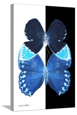 Miss Butterfly Duo Heboformo II - X-Ray B&W Edition-Philippe Hugonnard-Stretched Canvas Print