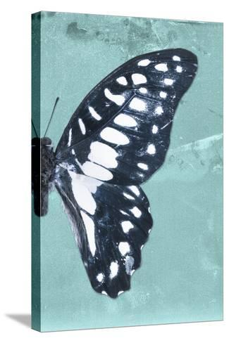 Miss Butterfly Graphium Profil - Turquoise-Philippe Hugonnard-Stretched Canvas Print