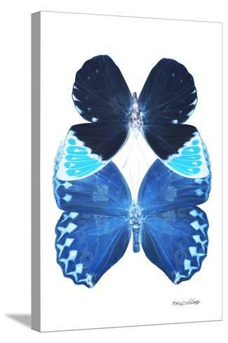 Miss Butterfly Duo Heboformo II - X-Ray White Edition-Philippe Hugonnard-Stretched Canvas Print