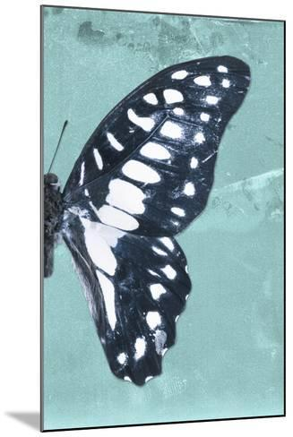 Miss Butterfly Graphium Profil - Turquoise-Philippe Hugonnard-Mounted Photographic Print