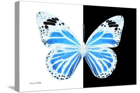 Miss Butterfly Genutia - X-Ray B&W Edition-Philippe Hugonnard-Stretched Canvas Print