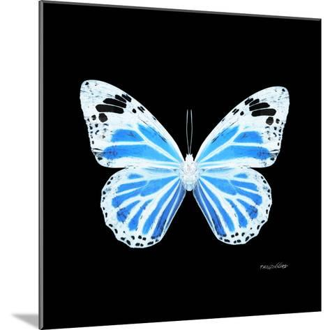Miss Butterfly Genutia Sq - X-Ray Black Edition-Philippe Hugonnard-Mounted Photographic Print