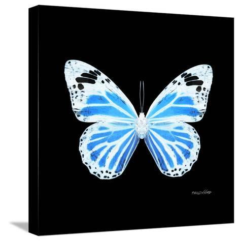 Miss Butterfly Genutia Sq - X-Ray Black Edition-Philippe Hugonnard-Stretched Canvas Print