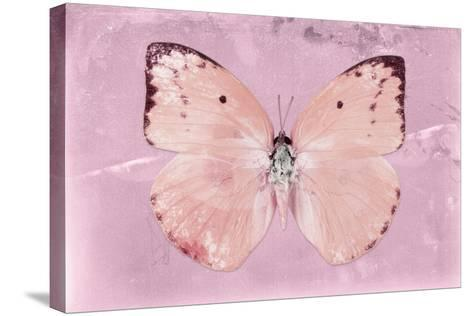 Miss Butterfly Catopsilia - Pale Violet-Philippe Hugonnard-Stretched Canvas Print