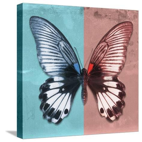 Miss Butterfly Agenor Sq - Turquoise & Red-Philippe Hugonnard-Stretched Canvas Print