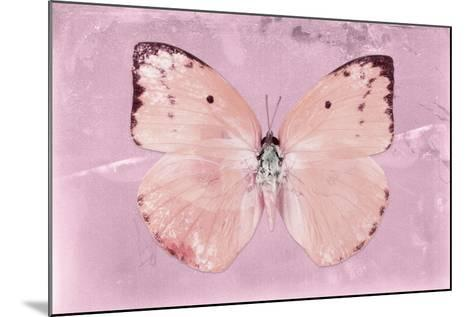 Miss Butterfly Catopsilia - Pale Violet-Philippe Hugonnard-Mounted Photographic Print