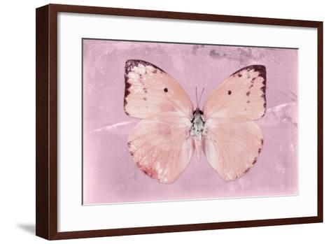 Miss Butterfly Catopsilia - Pale Violet-Philippe Hugonnard-Framed Art Print