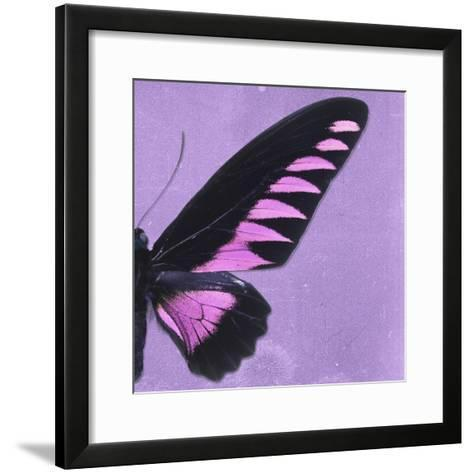 Miss Butterfly Brookiana Sq - Mauve-Philippe Hugonnard-Framed Art Print