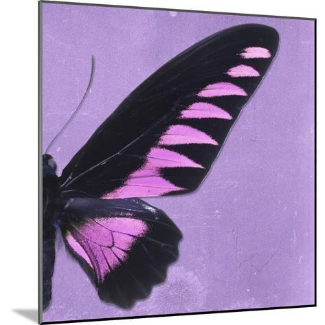 Miss Butterfly Brookiana Sq - Mauve-Philippe Hugonnard-Mounted Photographic Print