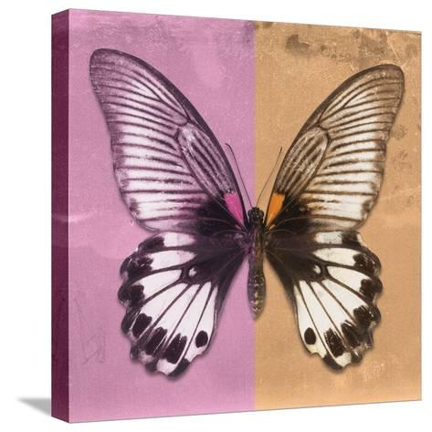 Miss Butterfly Agenor Sq - Pale Violet & Orange-Philippe Hugonnard-Stretched Canvas Print