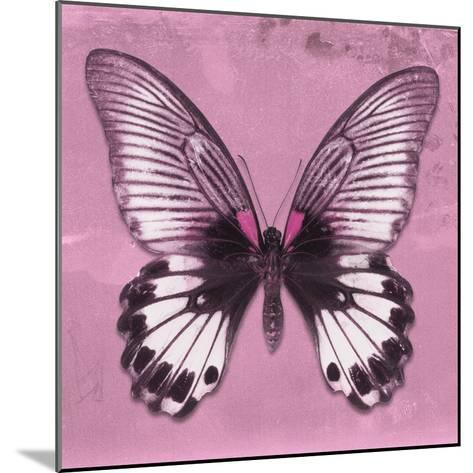 Miss Butterfly Agenor Sq - Pale Violet-Philippe Hugonnard-Mounted Photographic Print