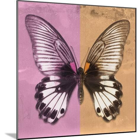 Miss Butterfly Agenor Sq - Pale Violet & Orange-Philippe Hugonnard-Mounted Photographic Print