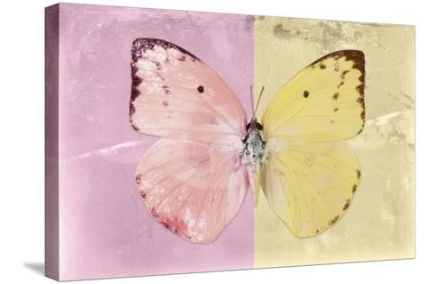 Miss Butterfly Catopsilia - Pale Violet & Gold-Philippe Hugonnard-Stretched Canvas Print