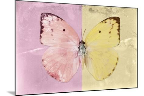 Miss Butterfly Catopsilia - Pale Violet & Gold-Philippe Hugonnard-Mounted Photographic Print
