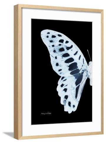 Miss Butterfly Graphium - X-Ray Left Black Edition-Philippe Hugonnard-Framed Art Print