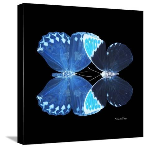 Miss Butterfly Duo Heboformo Sq - X-Ray Black Edition-Philippe Hugonnard-Stretched Canvas Print