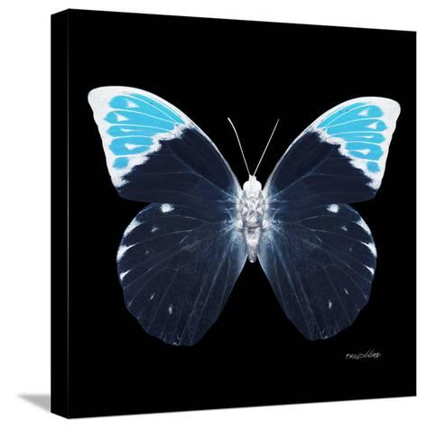 Miss Butterfly Hebomoia Sq - X-Ray Black Edition-Philippe Hugonnard-Stretched Canvas Print