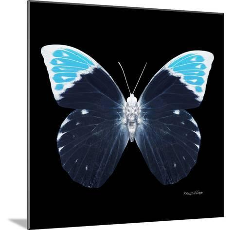 Miss Butterfly Hebomoia Sq - X-Ray Black Edition-Philippe Hugonnard-Mounted Photographic Print