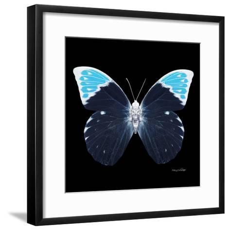 Miss Butterfly Hebomoia Sq - X-Ray Black Edition-Philippe Hugonnard-Framed Art Print