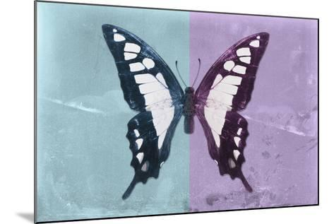 Miss Butterfly Cloanthus - Turquoise & Mauve-Philippe Hugonnard-Mounted Photographic Print