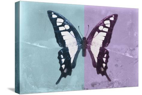 Miss Butterfly Cloanthus - Turquoise & Mauve-Philippe Hugonnard-Stretched Canvas Print