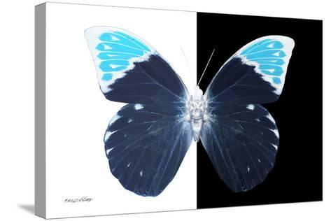 Miss Butterfly Hebomoia - X-Ray B&W Edition-Philippe Hugonnard-Stretched Canvas Print