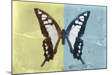 Miss Butterfly Cloanthus - Yellow & Turquoise-Philippe Hugonnard-Mounted Photographic Print