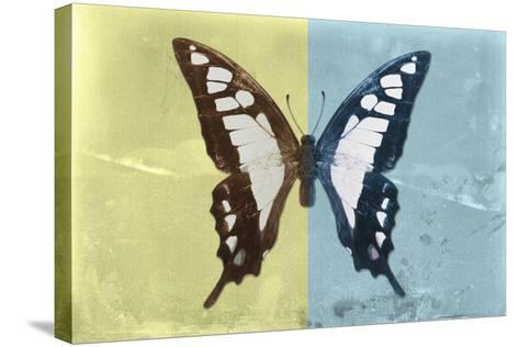 Miss Butterfly Cloanthus - Yellow & Turquoise-Philippe Hugonnard-Stretched Canvas Print