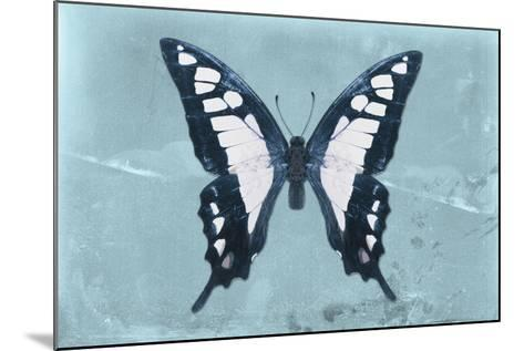 Miss Butterfly Cloanthus - Turquoise-Philippe Hugonnard-Mounted Photographic Print