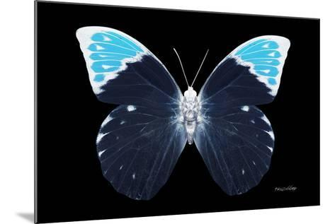 Miss Butterfly Hebomoia - X-Ray Black Edition-Philippe Hugonnard-Mounted Photographic Print