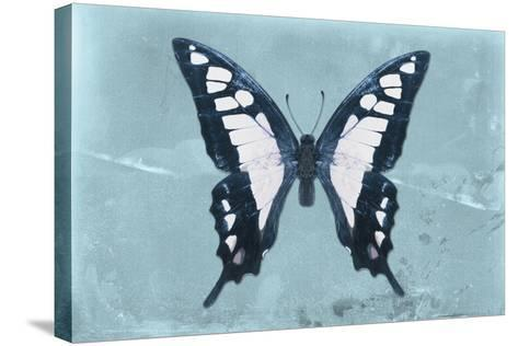 Miss Butterfly Cloanthus - Turquoise-Philippe Hugonnard-Stretched Canvas Print