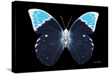 Miss Butterfly Hebomoia - X-Ray Black Edition-Philippe Hugonnard-Stretched Canvas Print
