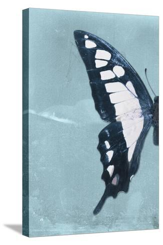 Miss Butterfly Cloanthus Profil - Turquoise-Philippe Hugonnard-Stretched Canvas Print