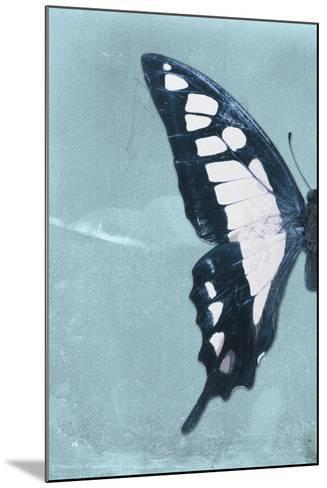 Miss Butterfly Cloanthus Profil - Turquoise-Philippe Hugonnard-Mounted Photographic Print