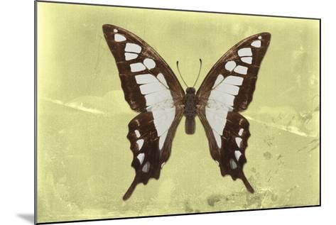 Miss Butterfly Cloanthus - Yellow-Philippe Hugonnard-Mounted Photographic Print