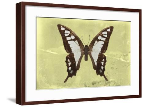 Miss Butterfly Cloanthus - Yellow-Philippe Hugonnard-Framed Art Print