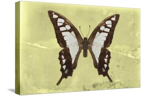 Miss Butterfly Cloanthus - Yellow-Philippe Hugonnard-Stretched Canvas Print