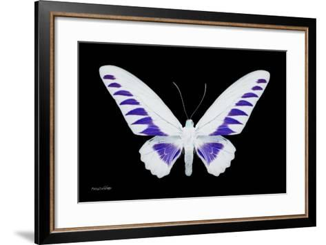 Miss Butterfly Brookiana - X-Ray Black Edition-Philippe Hugonnard-Framed Art Print