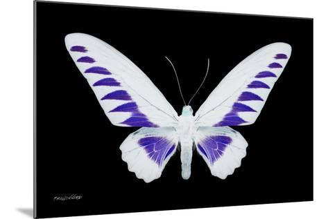 Miss Butterfly Brookiana - X-Ray Black Edition-Philippe Hugonnard-Mounted Photographic Print
