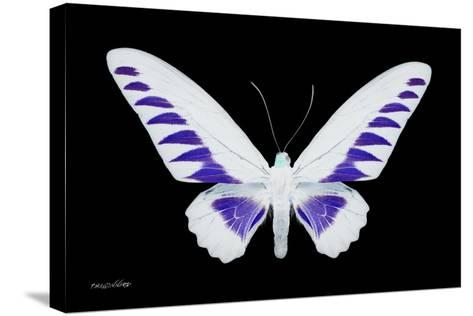 Miss Butterfly Brookiana - X-Ray Black Edition-Philippe Hugonnard-Stretched Canvas Print