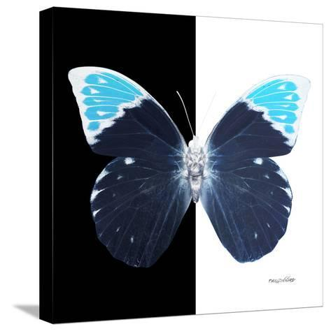 Miss Butterfly Hebomoia Sq - X-Ray B&W Edition-Philippe Hugonnard-Stretched Canvas Print