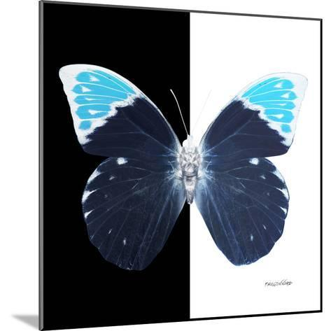 Miss Butterfly Hebomoia Sq - X-Ray B&W Edition-Philippe Hugonnard-Mounted Photographic Print