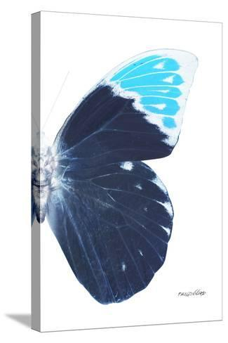 Miss Butterfly Hebomoia - X-Ray Right White Edition-Philippe Hugonnard-Stretched Canvas Print