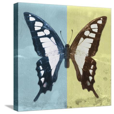 Miss Butterfly Cloanthus Sq - Turquoise & Yellow-Philippe Hugonnard-Stretched Canvas Print