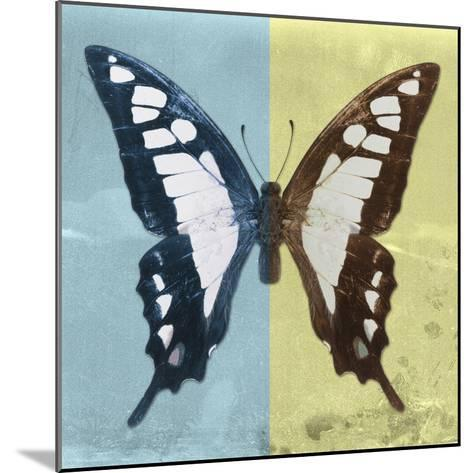 Miss Butterfly Cloanthus Sq - Turquoise & Yellow-Philippe Hugonnard-Mounted Photographic Print